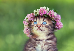 Portrait of cute little kitten crowned with a chaplet of clover