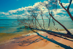 Wild desert beach with fallen dead trees. Cape Kolka