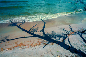 The shadow of the dead pine tree on the beach