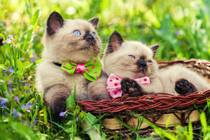 Two little kitten wearing bow tie on the grass