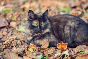 Cat sitting on the fallen leaves in autumn