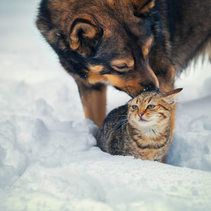 Cute scene. Dog taking care of the cat in the snow