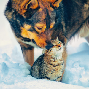 Cat and dog playing in snow