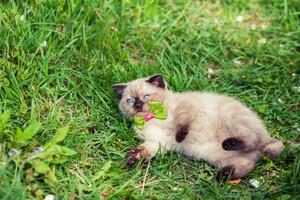 Cute kitten relaxing on the grass