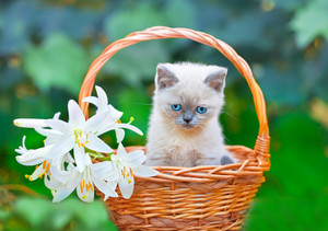 Little cute kitten sitting in a basket with flowers on the grass