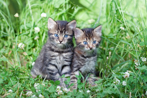 Two little kittens sitting on the grass