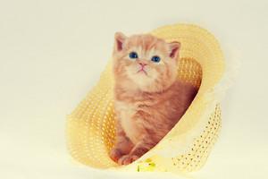 Cute kitten in straw hat