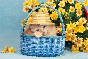 Cute little kitten sitting in a basket near yellow flowers