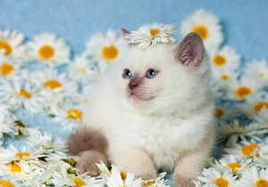 Portrait of little kitten with flowers