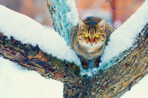 Portrait of cat on the snowy tree in winter