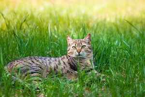 Cat lying in a tall grass