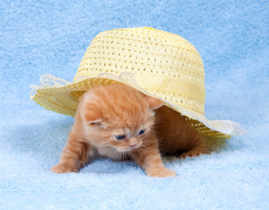 Red kitten sits under a straw hat
