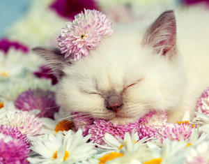 Portrait of little kitten with flowers