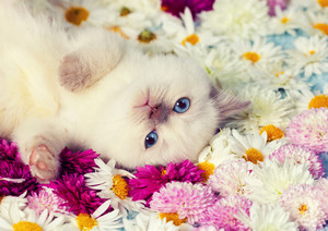 Cute kitten have a rest on the flowers