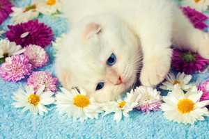 Little kitten lying among the flowers