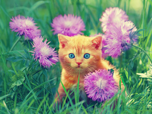 Cute little kitten sitting in flower meadow