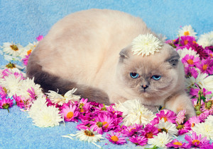 Portrait of cute cat having a rest on the flowers