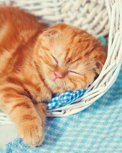 Cute red kitten sleeps in a basket