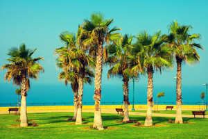 Palm trees on the embankment. Park near sea
