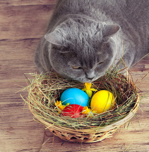 Cat sleeping near basket with colored eggs