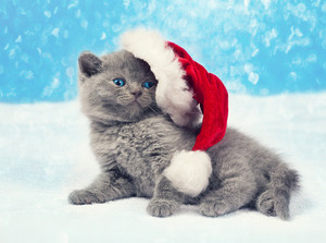 Little kitten wearing a Santa hat