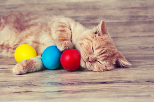 Little red kitten sleeping with colored eggs