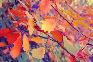 Vintage autumn colorful leaves background