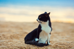Cat sitting on the beach