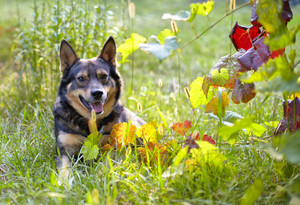 Portrait of the dog relaxing in the garden