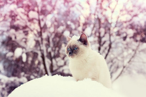Cat siting in snowdrift in winter forest