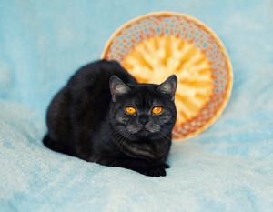Portrait of cute cat on blue blanket