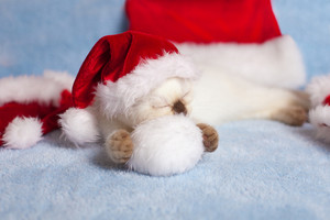 Little kitten wearing a santa hat sleeping on a white pom-poms