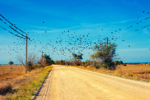 Birds fly over the country road