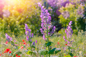 Wild flowers on the field