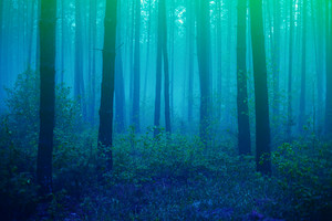 Beautiful foggy forest with magic light in the early morning