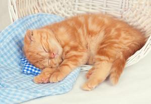 Little red kitten sleeps in a basket