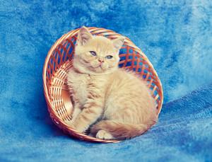 Cute red kitten sitting in a basket