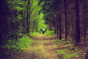 Walk in the forest. photo with vintage mood