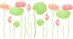 Water Lily Background