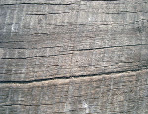Weathered_bark_wood