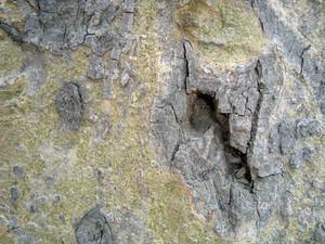 Weird_tree_bark