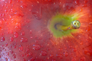 Wet Red Apple With Drops Of Water In Macro