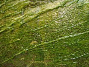 Wet_lichen_texture