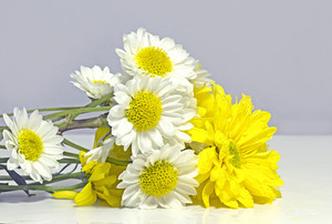 White And Yellow Flowers 230