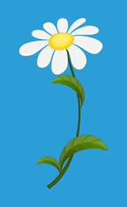 White Anniversary Flower
