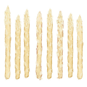White Asparagus Isolated