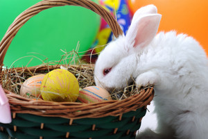 White beautiful rabbit, Easter bunny with eggs in basket