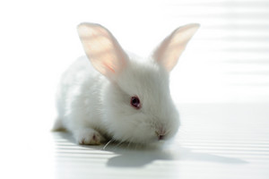 White beautiful rabbit, Easter bunny