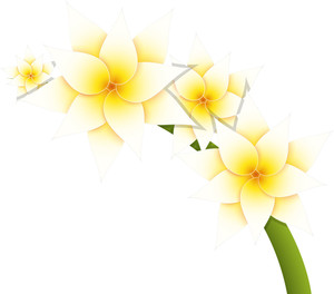 White Daisy Branch Vector