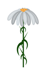 White Daisy Element